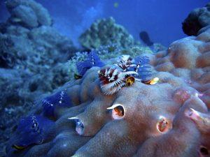 wyspa koral